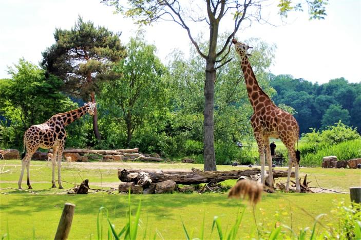 0Leipzig Zoo_9089