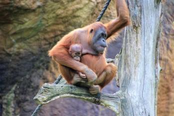 0z1Leipzig Zoo_9073