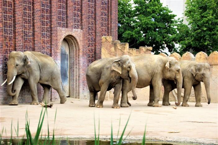 1Leipzig Zoo_8993