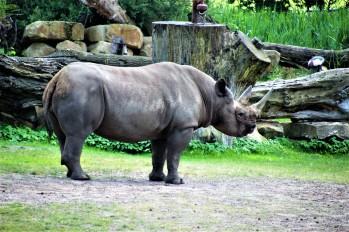 1Leipzig Zoo_9140